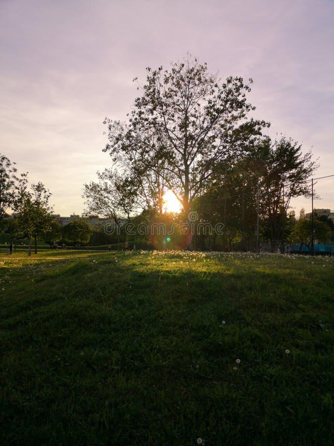 Prima del tramonto sopra il parco fotografia stock libera da diritti