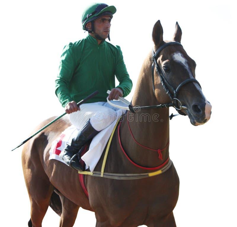 Prima della corsa di cavallo. immagine stock
