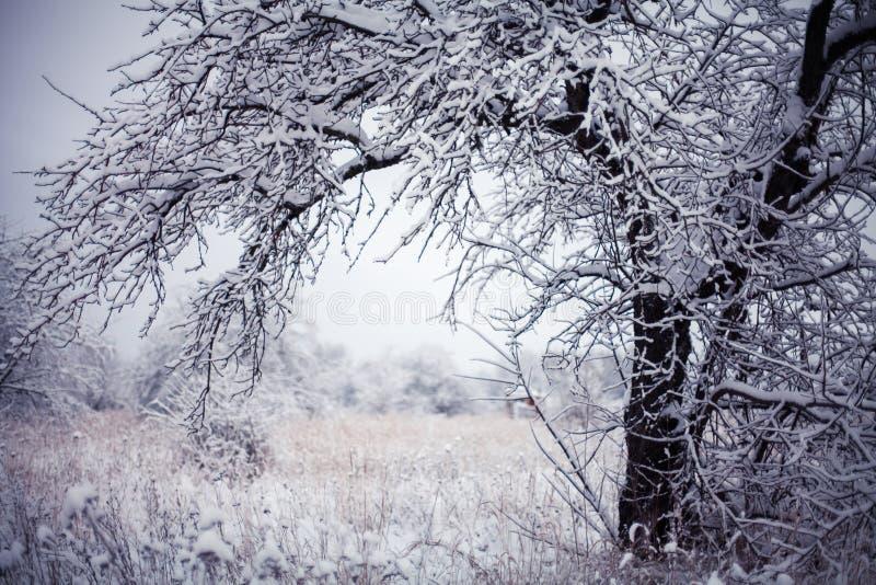 Prima neve immagini stock