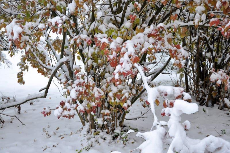 Prima neve bianca su leaves_5 verde fotografia stock