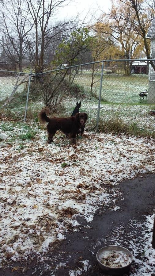 Prima neve del Michigan fotografia stock libera da diritti
