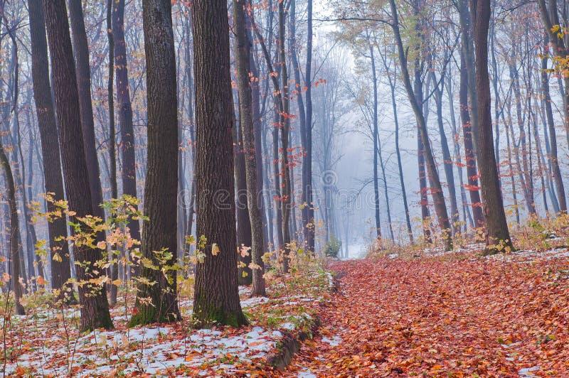 Prima neve nella foresta di autunno fotografie stock libere da diritti
