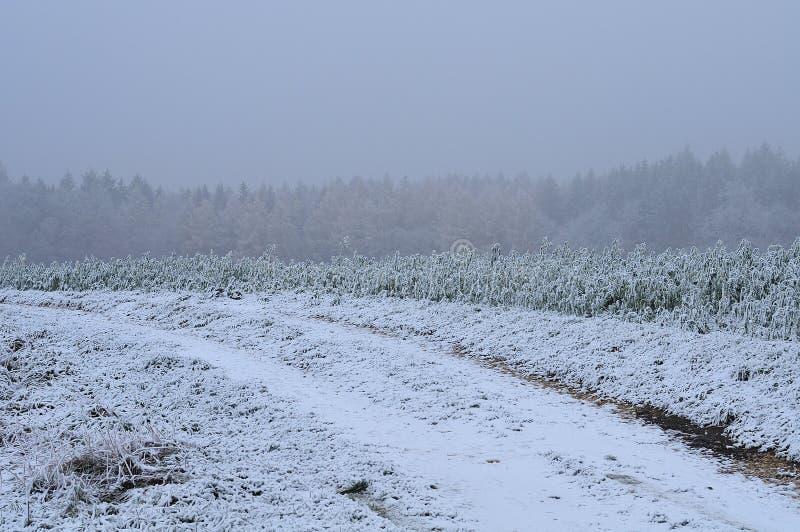 Prima neve a novembre sul giacimento del girasole immagini stock
