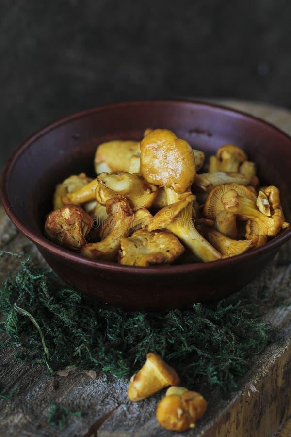 Primas Cogumelos recentemente colhidos na floresta foto de stock royalty free
