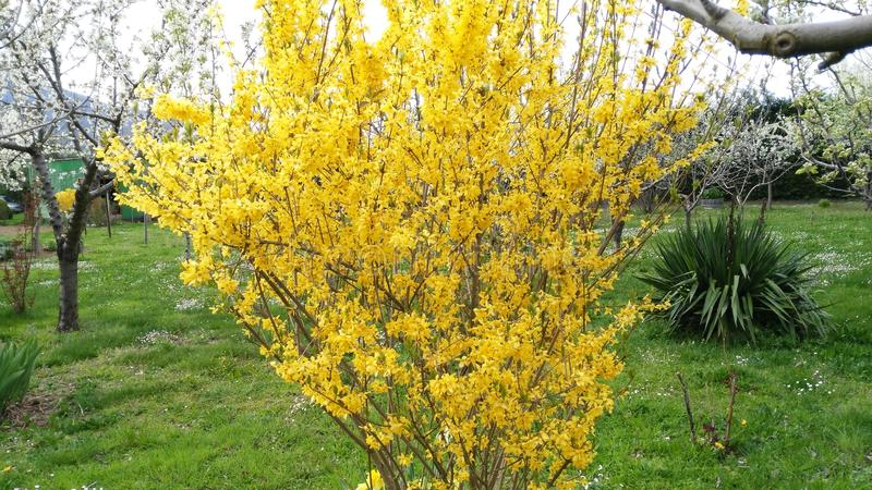 Primavera stock afbeeldingen