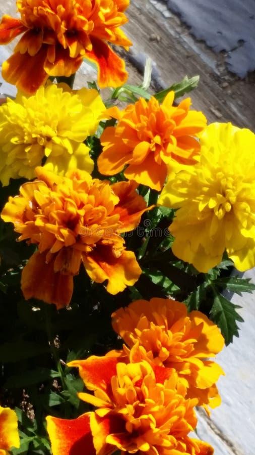 Primavera 2016 imagenes de archivo