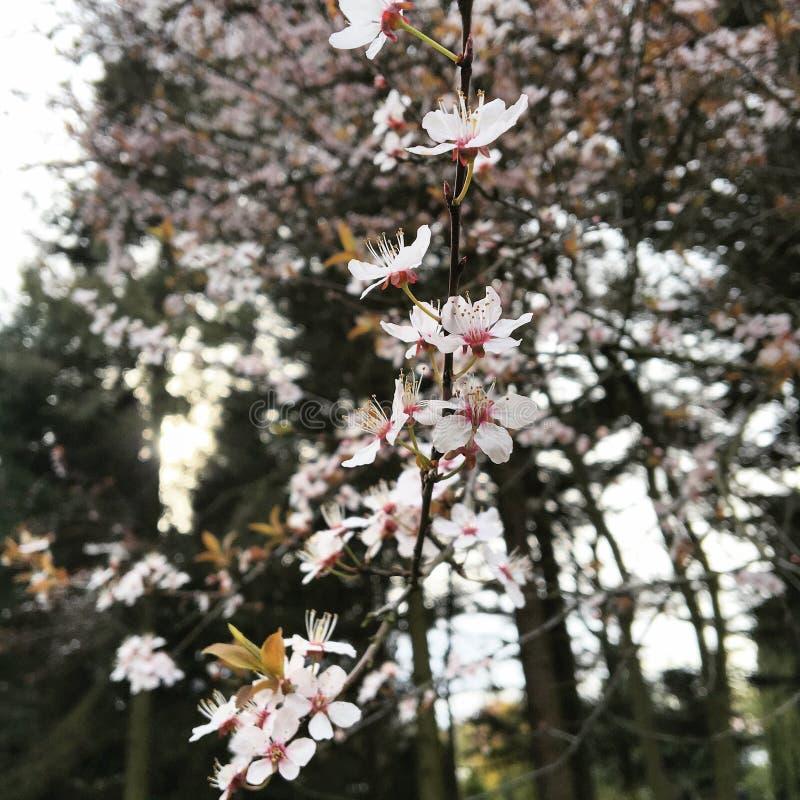 primavera imagenes de archivo
