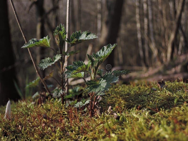 primavera immagine stock