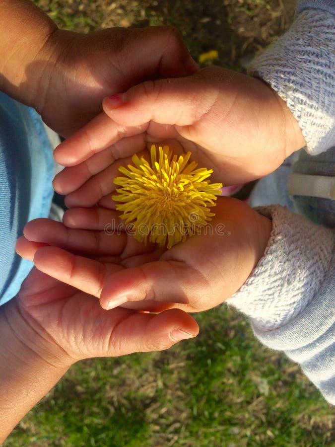 Primavera photos stock