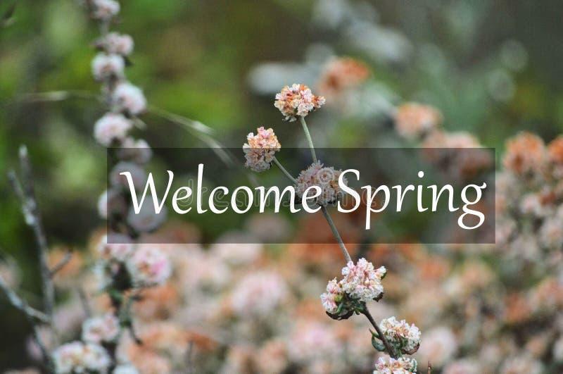Primavera agradable con las flores rosadas fotos de archivo