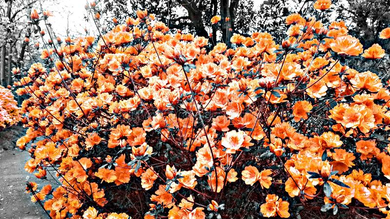 Primavera al parco di re di pendleton immagini stock libere da diritti