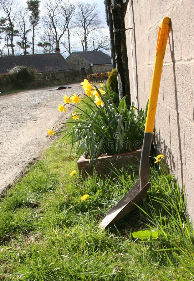 Primavera amarela imagem de stock royalty free