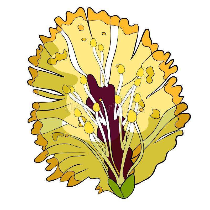 Primavera amarilla de la flor del árbol del sauce Ilustración del vector ilustración del vector