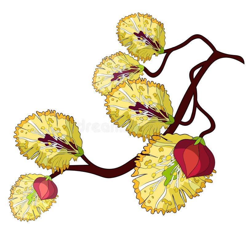 Primavera amarilla de la flor de la rama del sauce Ilustración del vector ilustración del vector