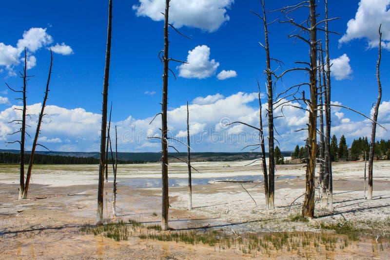 Primavera amarilla de la Mammoth Hot Springs en el parque nacional de Yellowstone fotografía de archivo