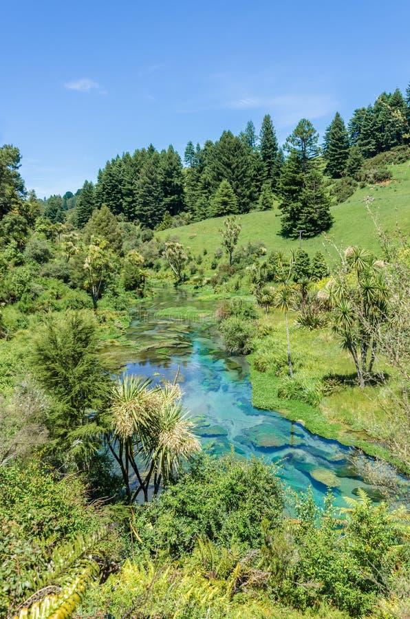 Primavera azul que está situada en Te Waihou Walkway, Hamilton New Zealand imagen de archivo libre de regalías