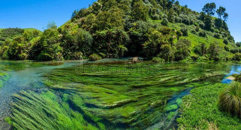 Primavera azul que está situada en Te Waihou Walkway, Hamilton New Zealand imagenes de archivo