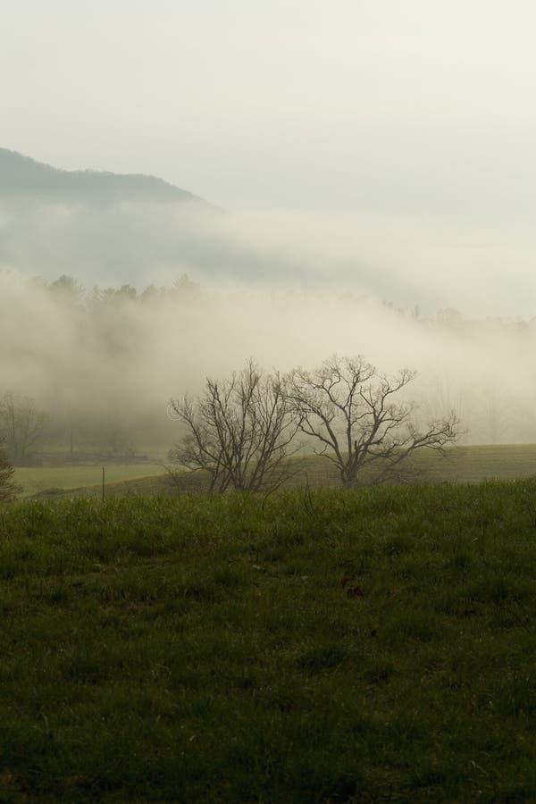 Primavera, baia di Cades, grande Mtns fumoso NP, fotografia stock libera da diritti