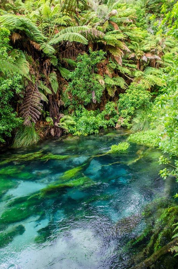 Primavera blu che è posizionata a Te Waihou Walkway, Hamilton New Zealand fotografie stock libere da diritti