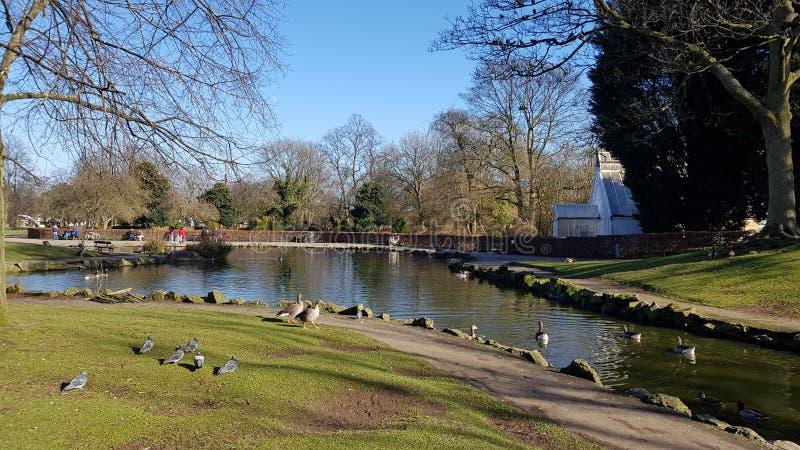 Primavera britannica 2018 del parco di Pearson immagini stock