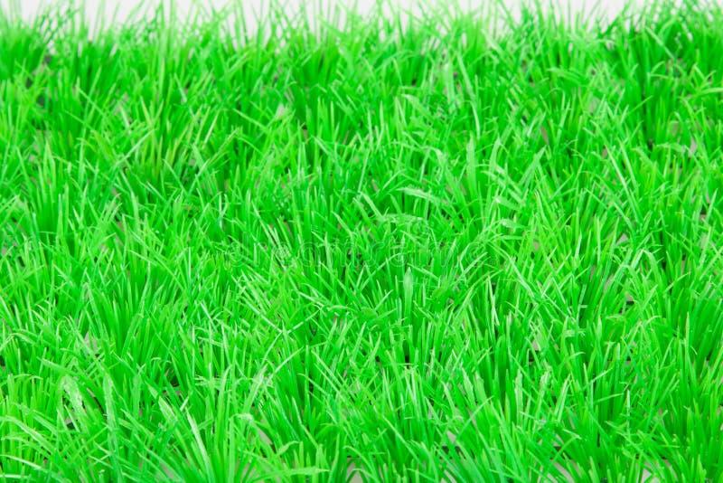 Primavera, césped fresco de la hierba verde fotos de archivo libres de regalías