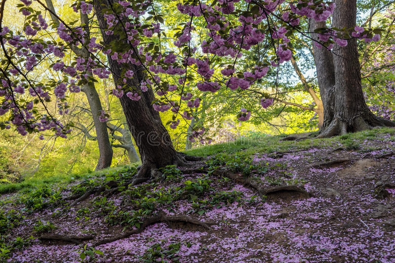 Primavera in Central Park fotografia stock