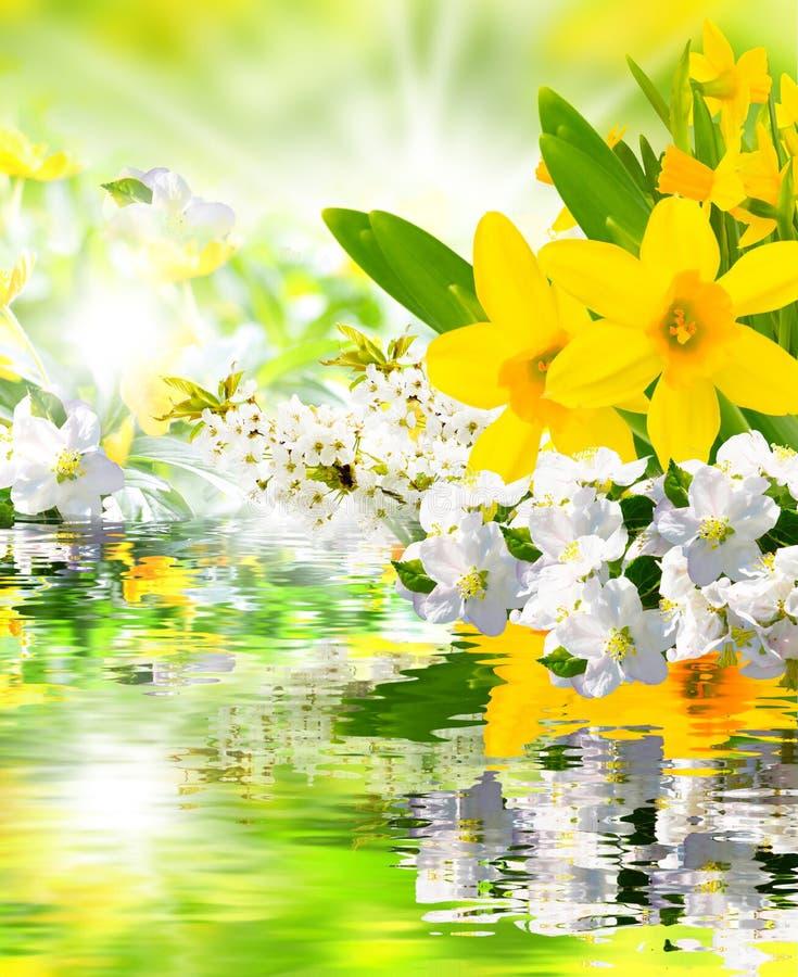 Primavera che si sveglia fotografia stock