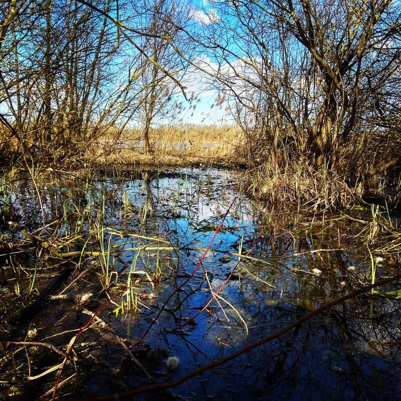 Primavera che si sveglia, la natura del lago del tordo fotografia stock