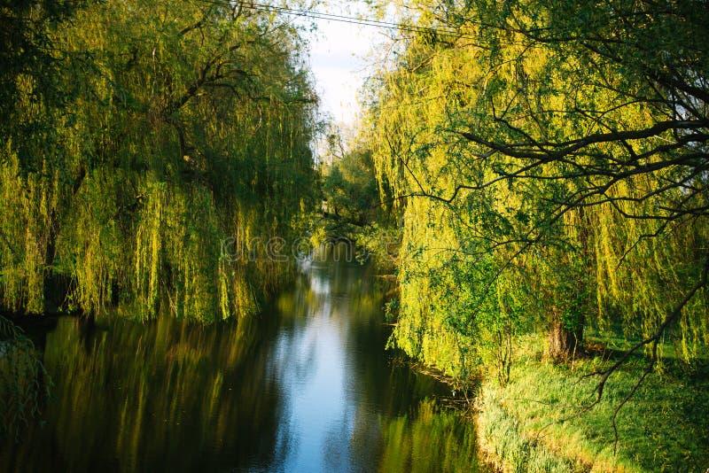 Primavera che uguaglia paesaggio soleggiato vicino al fiume fotografia stock