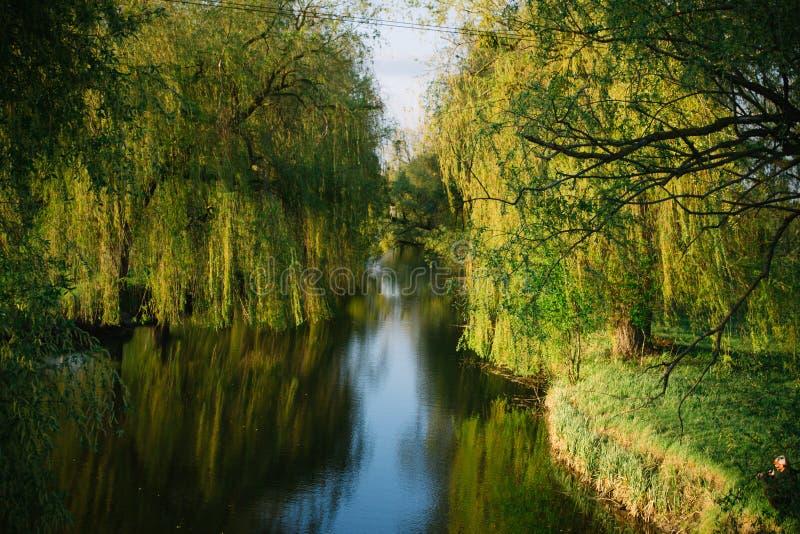 Primavera che uguaglia paesaggio soleggiato vicino al fiume fotografie stock