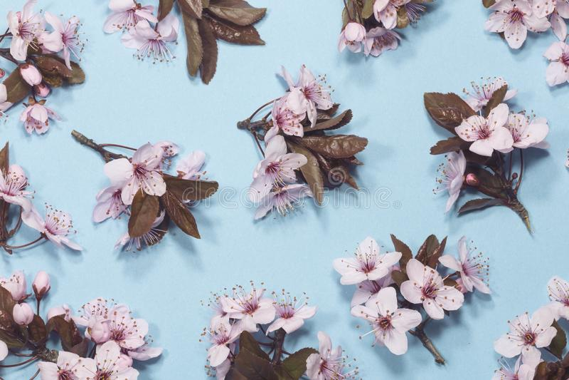 Primavera Cherry Blossom fotografia stock
