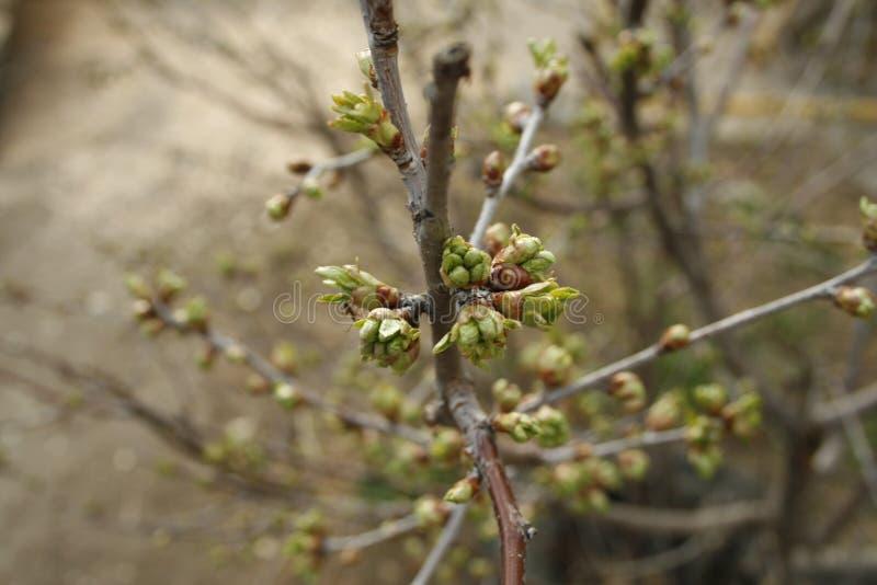 In primavera cominci immagine stock libera da diritti