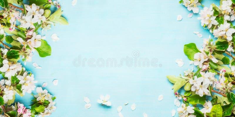 Primavera con las ramitas del flor de la primavera en el fondo azul de la turquesa, visión superior fotos de archivo