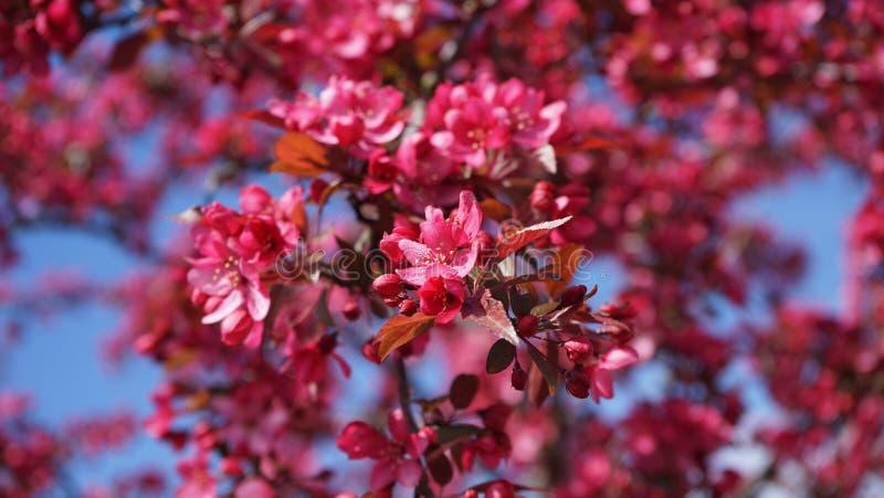 Primavera de Bellevue fotografía de archivo