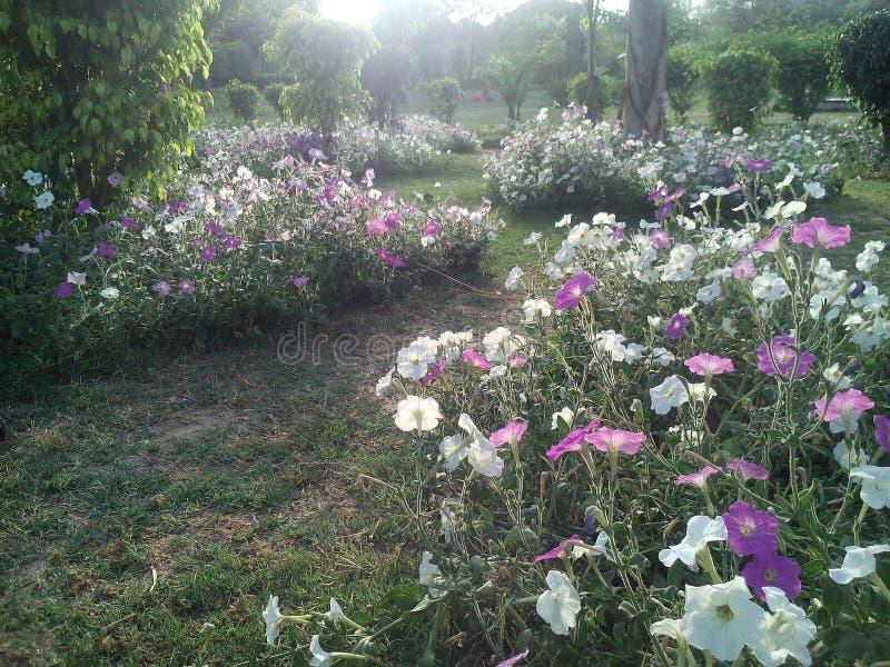 Primavera de la naturaleza imagen de archivo