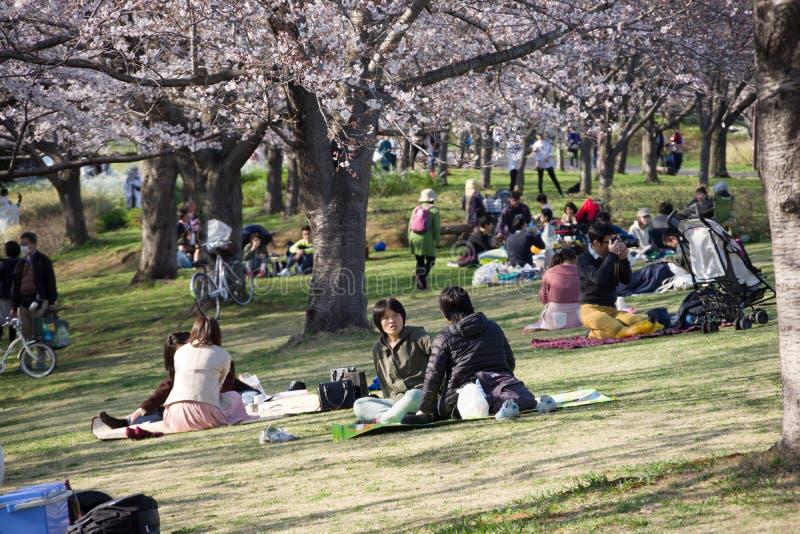 primavera 2019 de los cerezos fotos de archivo