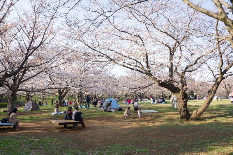 primavera 2019 de los cerezos imagenes de archivo