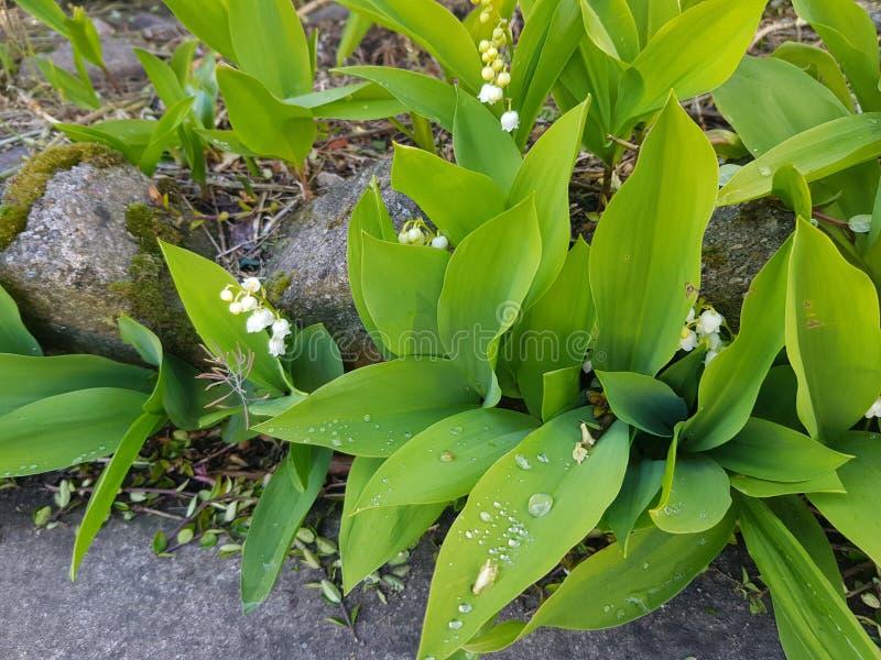 Primavera del verde de la flor imágenes de archivo libres de regalías