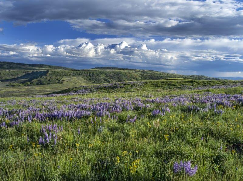 Primavera di Casper Mountain Wyoming fotografie stock