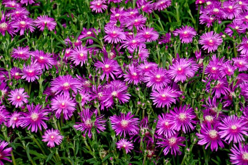 Primavera e fiori immagine stock libera da diritti