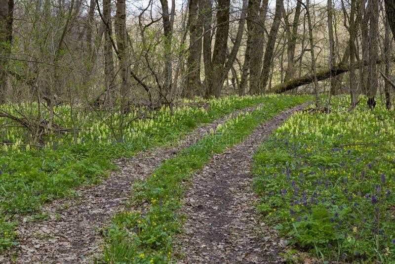 primavera em flores da floresta na floresta foto de stock