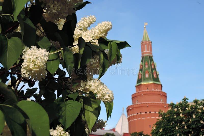 primavera em Moscou Torre do Kremlin de Moscou e flores lil?s brancas da ?rvore fotos de stock royalty free