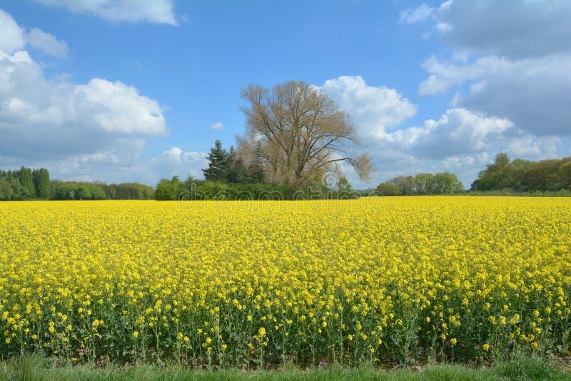 primavera em Rhineland, Reno norte westphalia, Alemanha imagem de stock royalty free