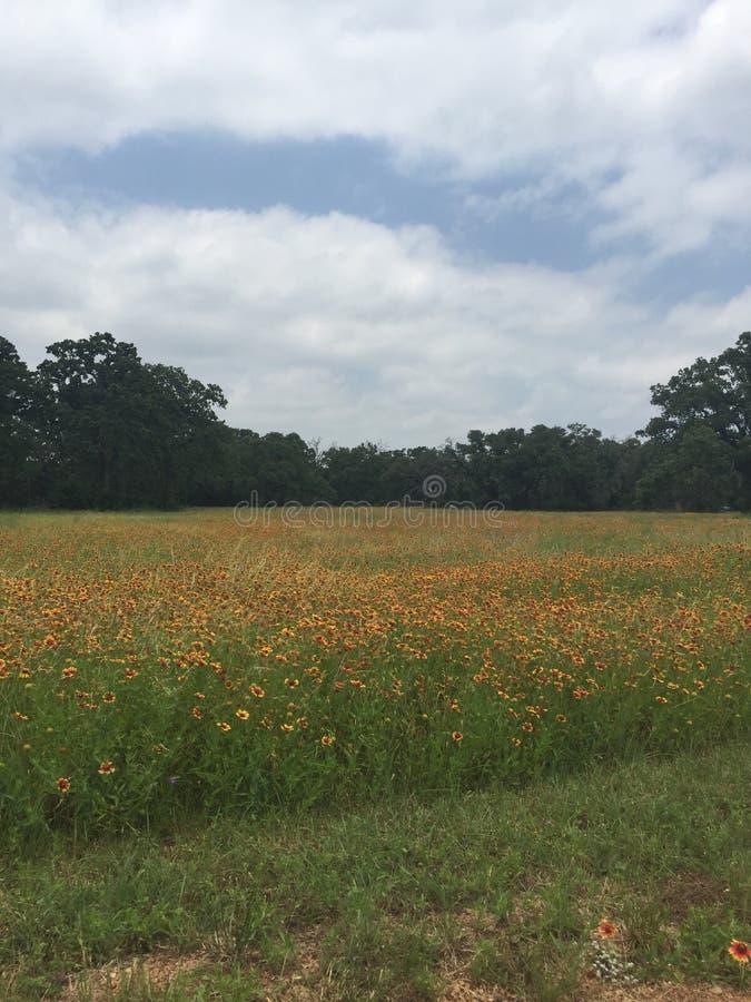 primavera em Texas foto de stock