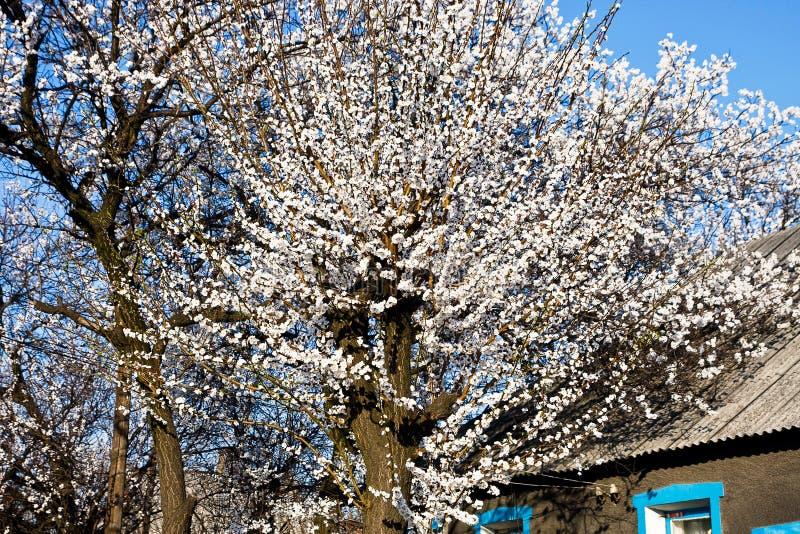 Primavera en Donetsk fotografía de archivo