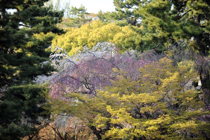 Primavera en el parque japonés, Kyoto imagen de archivo