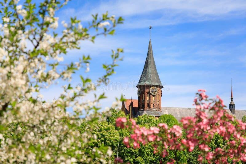 Primavera en Kaliningrado fotos de archivo