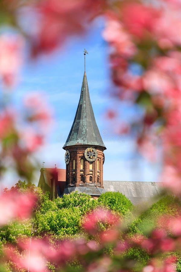 Primavera en Kaliningrado fotografía de archivo