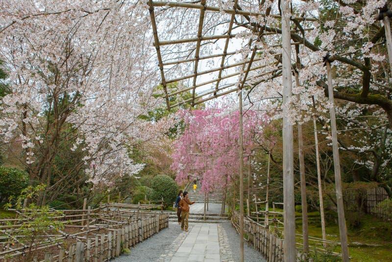 Primavera en Kyoto, Japón fotos de archivo