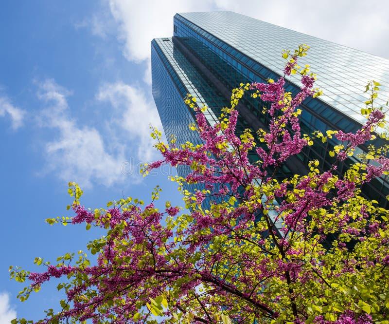 Primavera en la ciudad foto de archivo libre de regalías